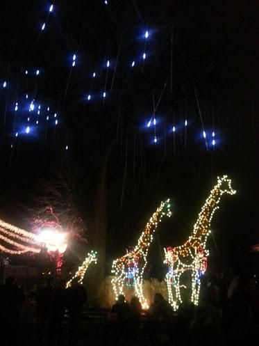 Giraffe light sculptures