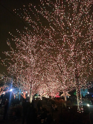 Row of trees sparkling with colorful lights