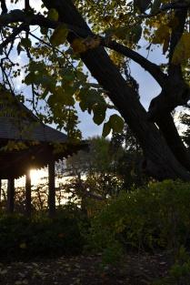 osaka japanese gardens wooded island jackson park chicago