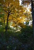 wooded island jackson park