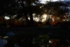 Sun setting beyond the Japanese Garden