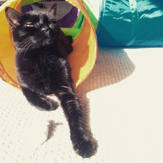 black cat sunbathing